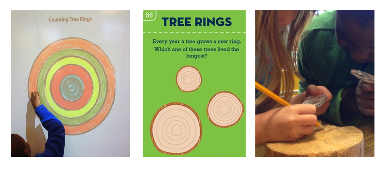 Image 5 - counting tree rings.png