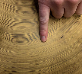 Image 7 - tree rings.png