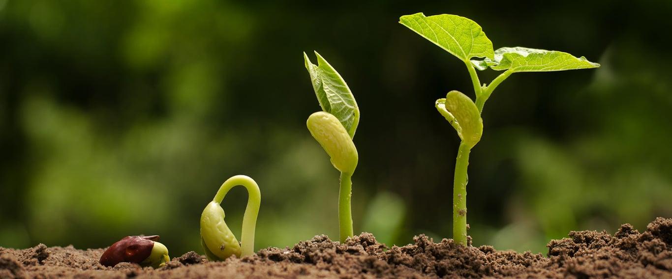 Grow Your Teaching Practice