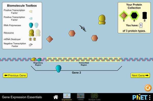 gene-expression-essentials-600