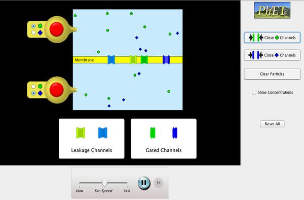 membrane-channels-600